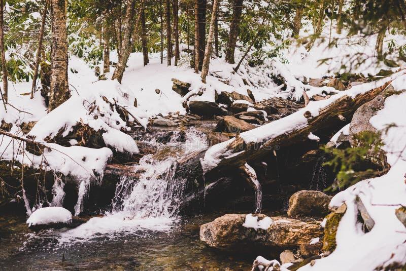 Córrego de Smokey Mountains na neve fotografia de stock royalty free