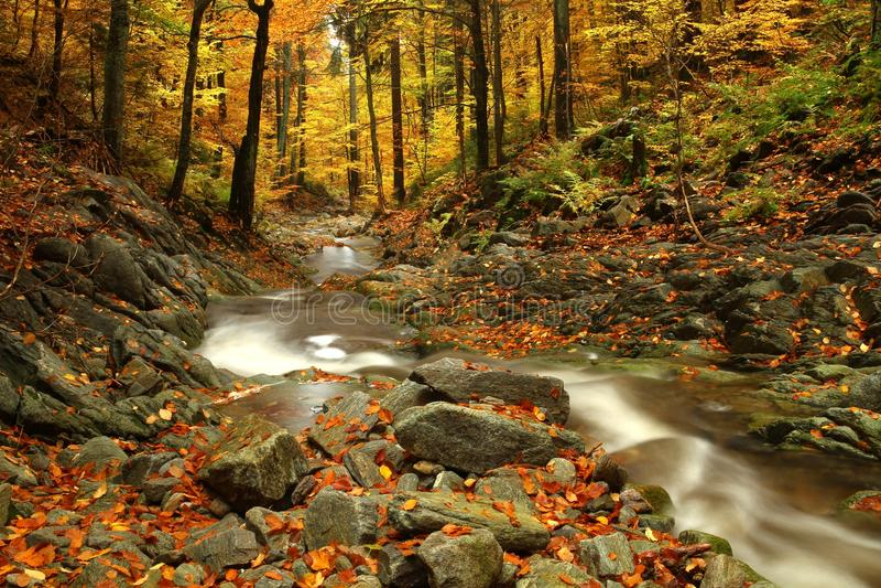 Córrego do outono fotografia de stock