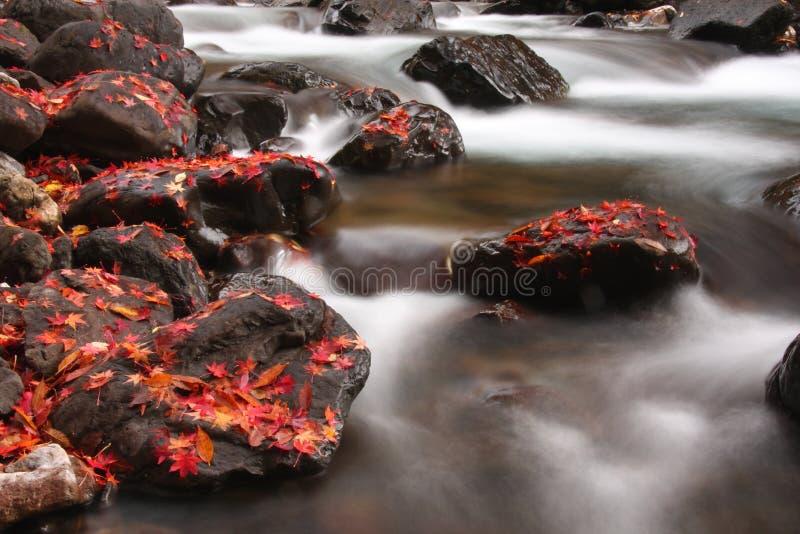 Córrego do outono foto de stock royalty free