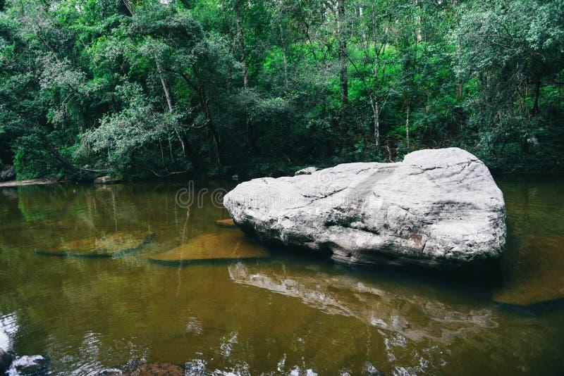 Córrego do rio da montanha que flui da cachoeira - planta verde da natureza da paisagem e selva da floresta úmida da árvore com o foto de stock royalty free