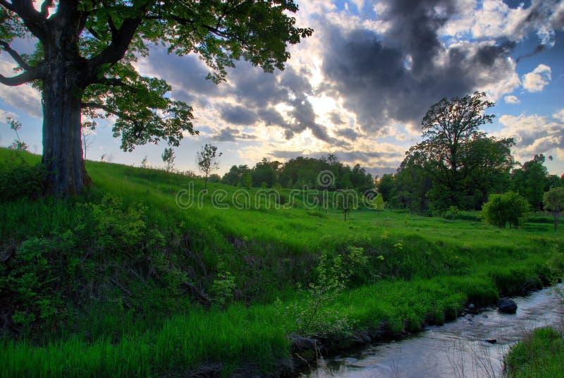Córrego e árvore do prado fotografia de stock royalty free