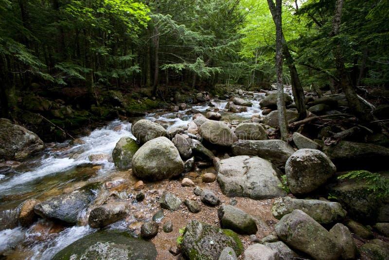 Córrego e floresta fotografia de stock royalty free