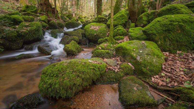 Córrego em Blackforest fotografia de stock