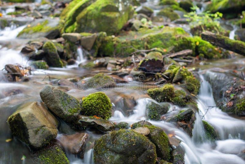 Córrego em uma floresta da montanha foto de stock royalty free