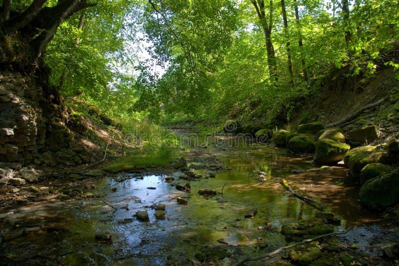 Córrego em uma sombra de madeira fotos de stock