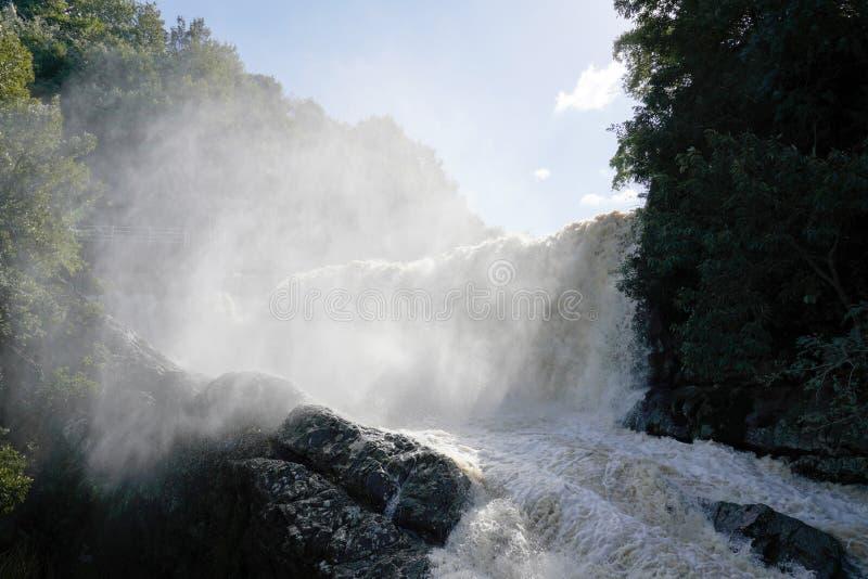 Córrego enlameado que corre através do rio imagens de stock royalty free