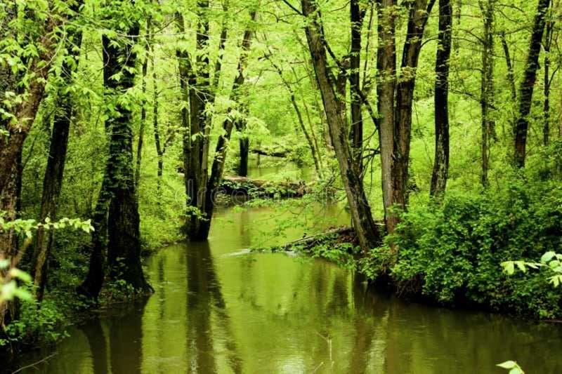 Córrego escondido imagens de stock