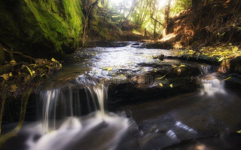 Download Córrego ideal imagem de stock. Imagem de sonho, árvore - 10064095