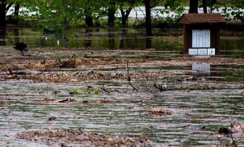 Córrego inundado imagem de stock royalty free