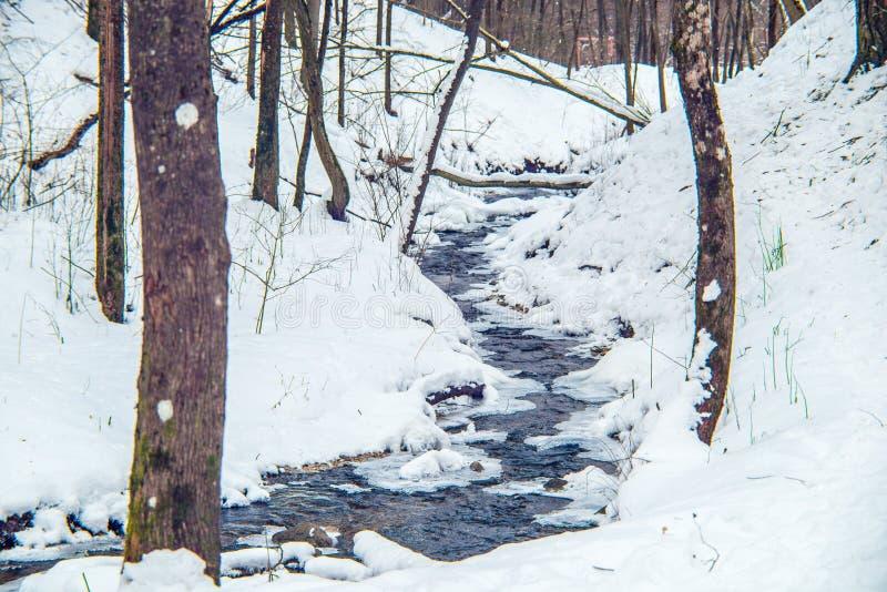 Córrego minúsculo no tempo de inverno da floresta imagens de stock royalty free