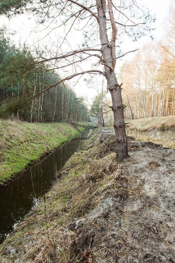 Download Córrego na floresta foto de stock. Imagem de limpo, estação - 65575144