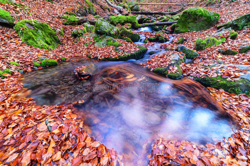 Córrego na floresta fotos de stock