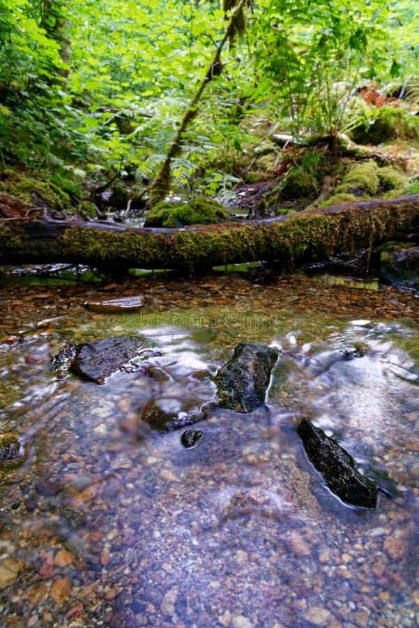 Córrego na fuga de Diablo Lake nas cascatas nortes fotos de stock royalty free
