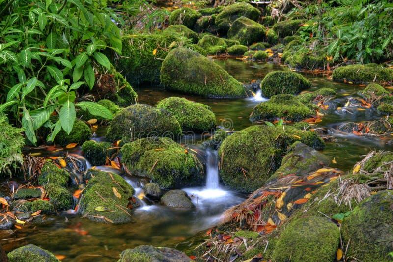 Córrego na selva de Havaí imagem de stock