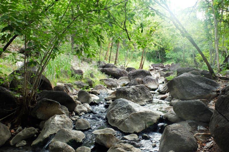 Córrego natural da água quente na floresta fotos de stock royalty free