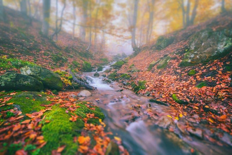 Córrego nevoento na garganta da montanha, deslocamento da floresta do outono da inclinação imagem de stock royalty free
