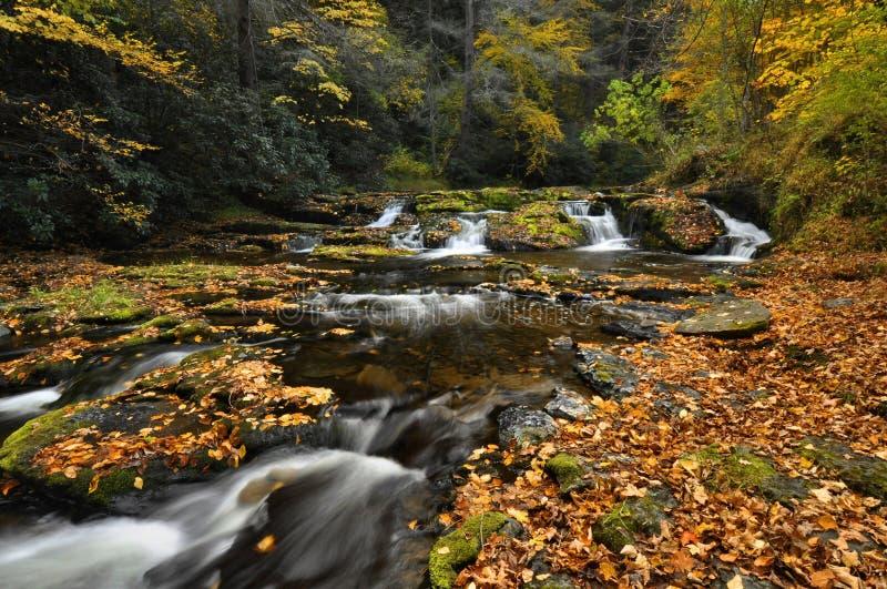 Córrego no outono fotos de stock