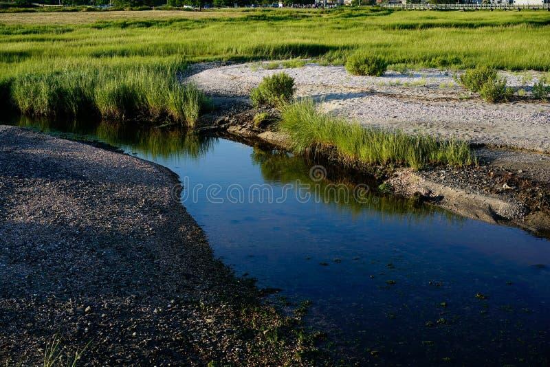 Córrego nos pantanais fotografia de stock