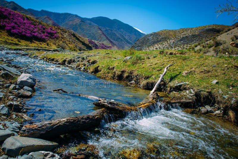Córrego pequeno da montanha entre os montes e as montanhas de florescência cobertos com o brilho da floresta da água, do céu azul fotografia de stock royalty free
