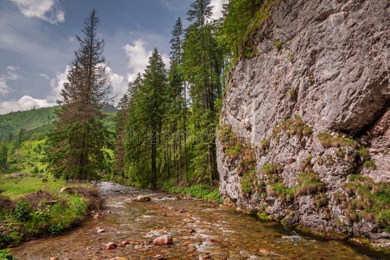 Córrego pequeno maravilhoso no vale de Koscieliska em montanhas de Tatra fotografia de stock royalty free