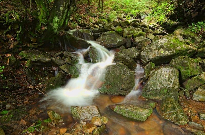 Córrego pequeno na ideia bonita da floresta do verão das montanhas da paisagem da cachoeira Zakarpattya, Ucrânia fotografia de stock