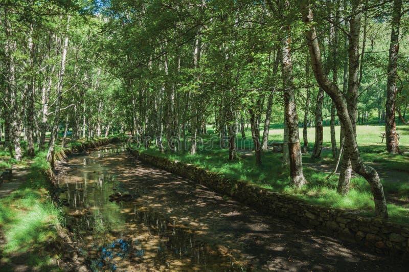 Córrego que corre através de um bosque frondoso em um dia ensolarado imagens de stock royalty free