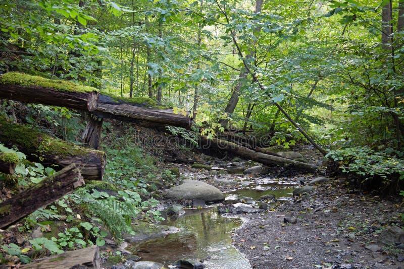 Córrego que corre através de uma floresta dappled fotos de stock