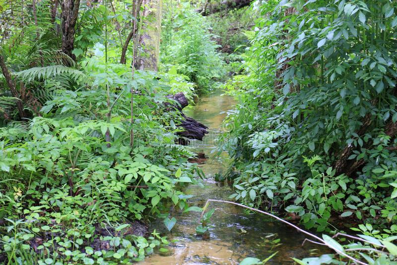 Córrego que flui na região selvagem de Florida imagem de stock royalty free