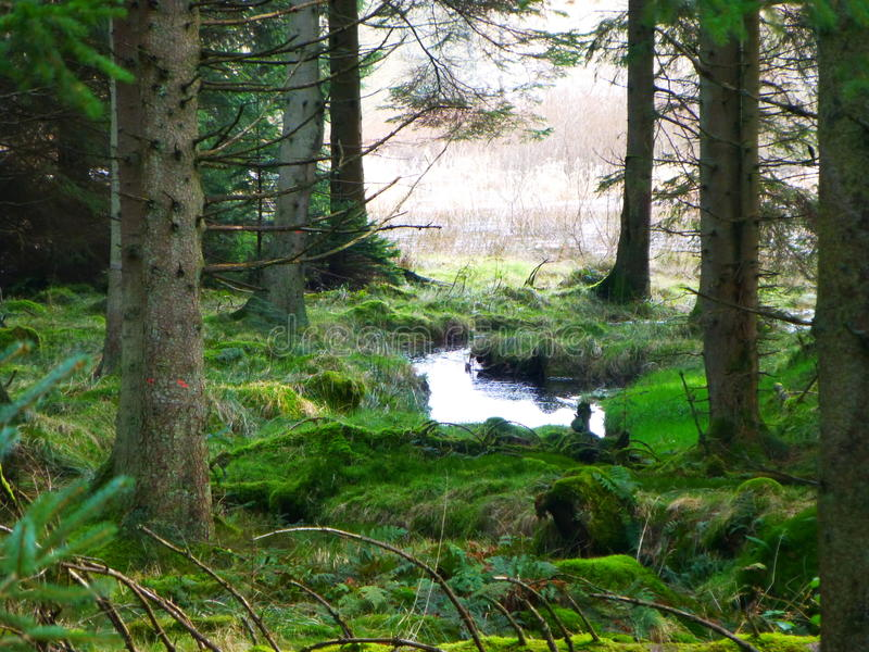 Córrego Runnig através da floresta de Kielder fotografia de stock royalty free