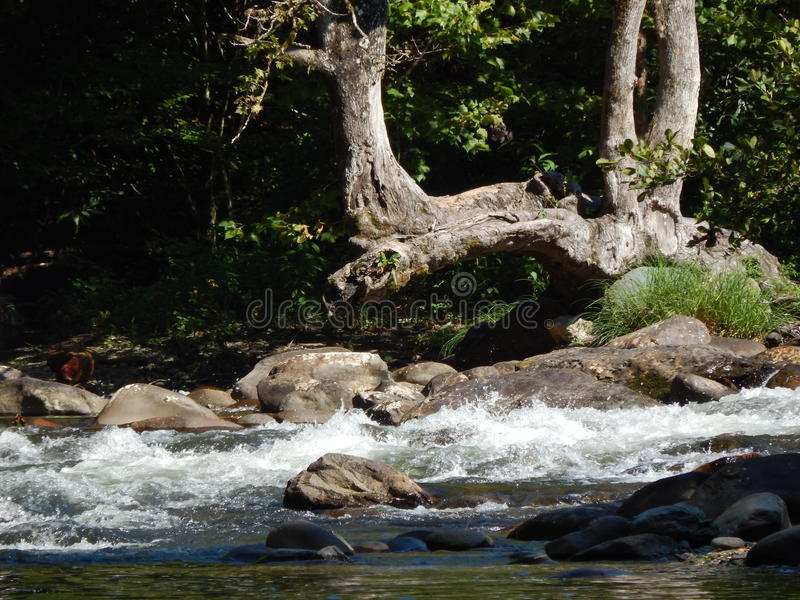 Córrego Running foto de stock