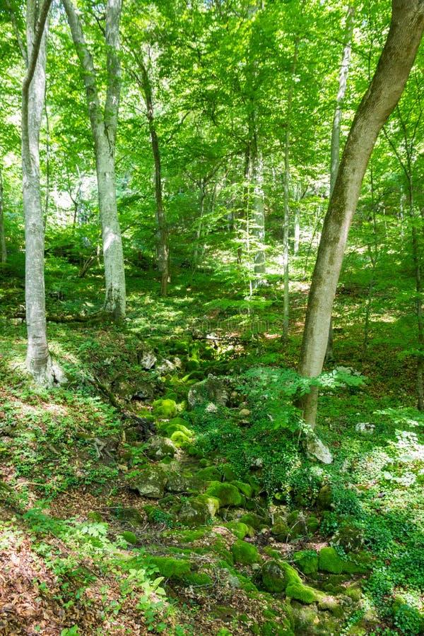 Córrego seco em Forest Crimean Peninsula imagens de stock