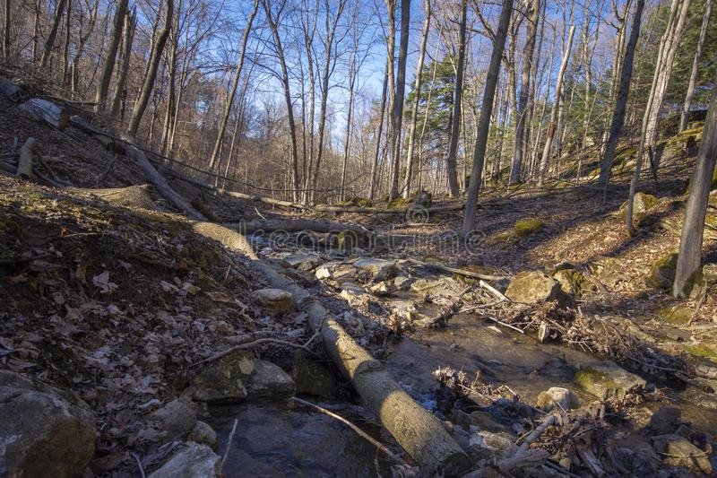 Córrego seco na floresta na mola fotografia de stock