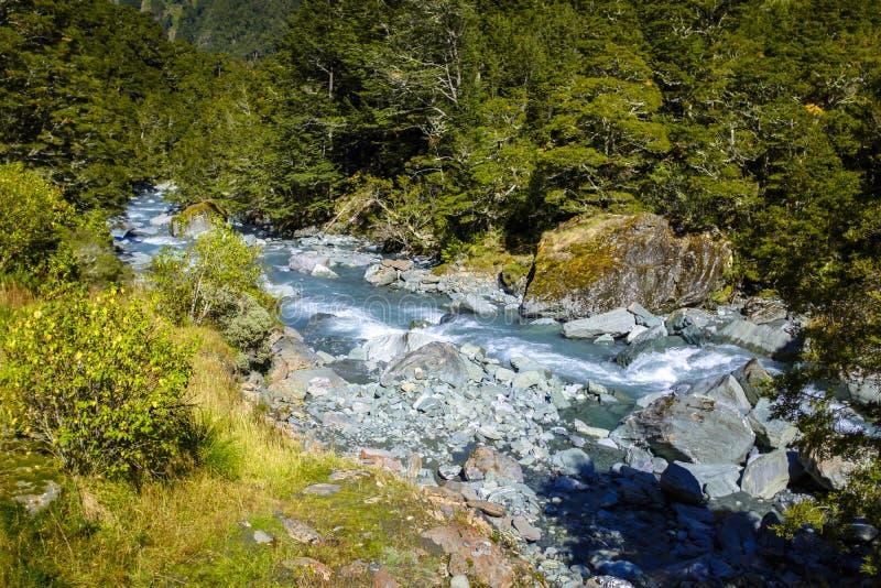 Córrego selvagem bonito em Nova Zelândia imagens de stock royalty free