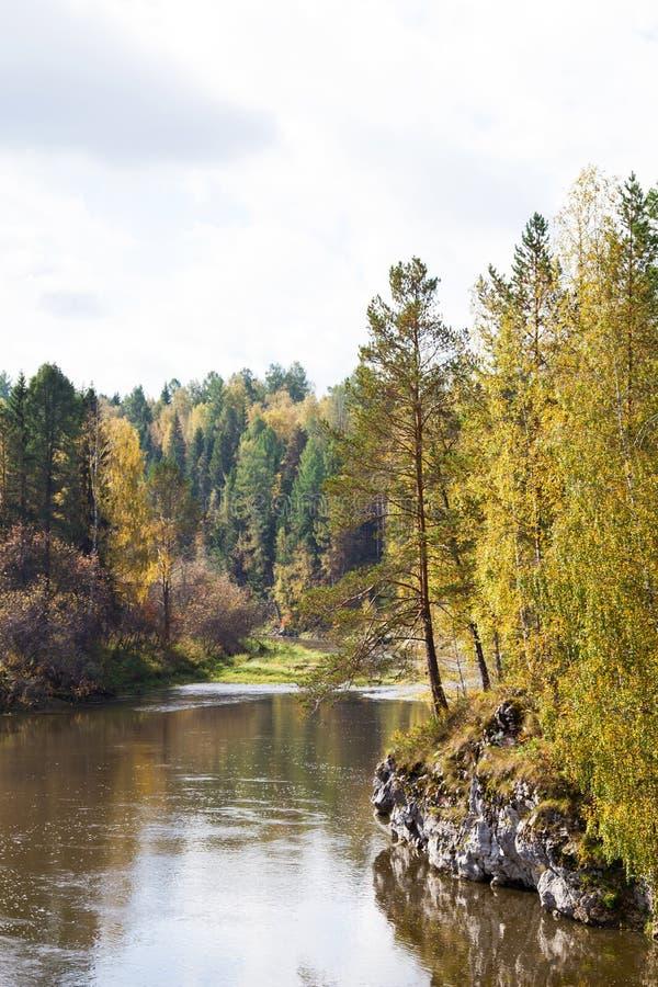 Córregos dos cervos da reserva foto de stock
