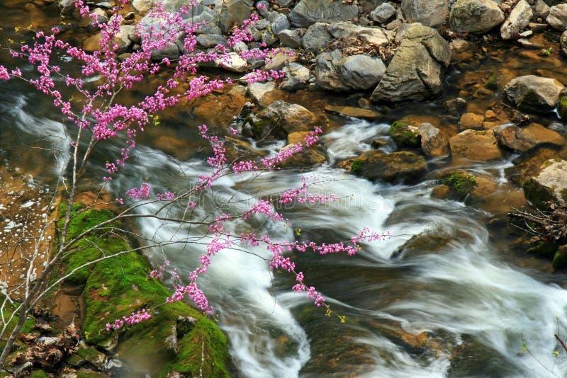 Córregos e cascatas da água fotografia de stock royalty free