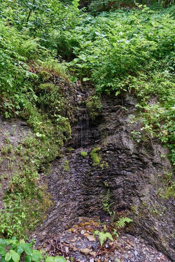 Córregos pequenos do volume de água abaixo da inclinação musgo-coberta imagem de stock