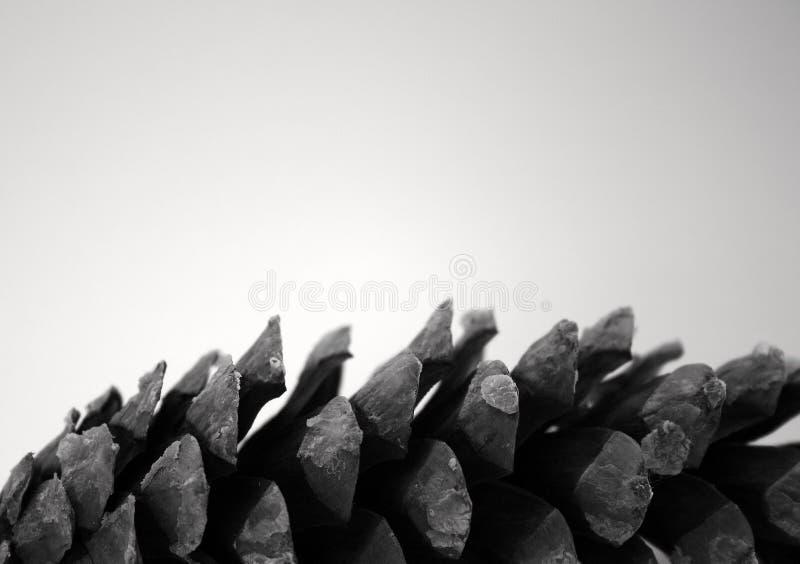 Cône de pin photographie stock libre de droits