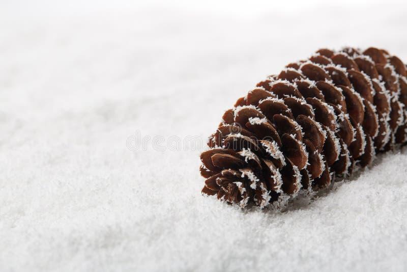Cône de sapin se trouvant sur un fond de neige avec l'espace de copie Fond de l'hiver images libres de droits