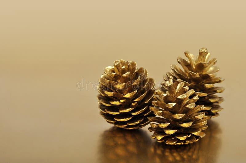 Cônes d'or de pin images libres de droits