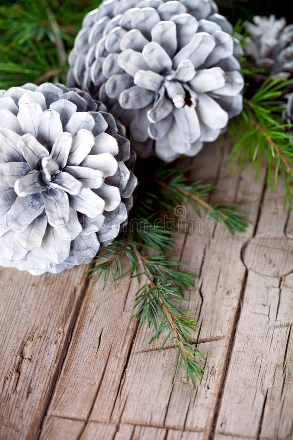 Cônes de branche d'arbre de sapin de Noël et de pin blanc photos stock