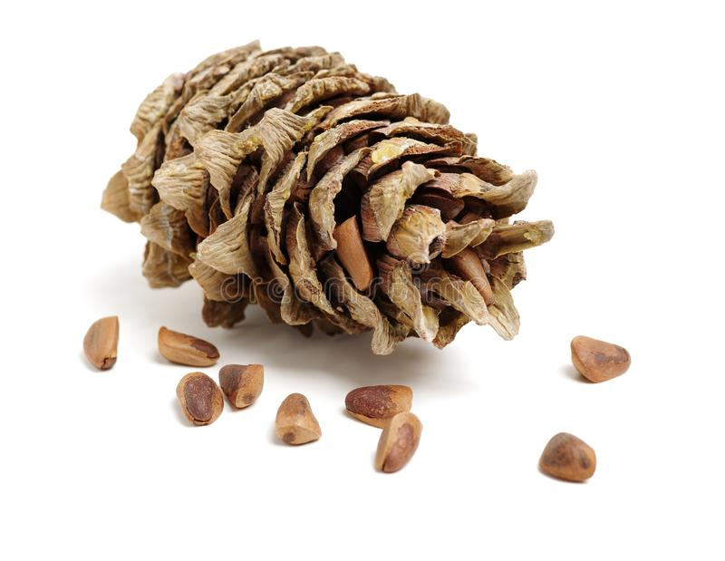 Cônes de pin de cèdre avec les écrous non épluchés et épluchés image libre de droits