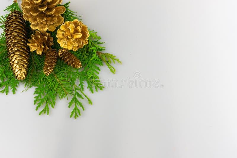 Cônes de pin d'or sur la verdure dans le coin gauche supérieur image libre de droits