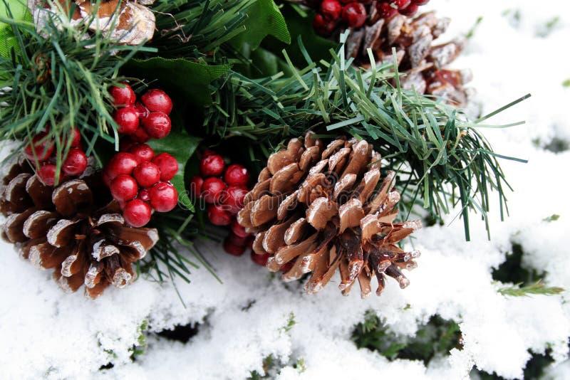 Cônes de pin dans la neige images libres de droits