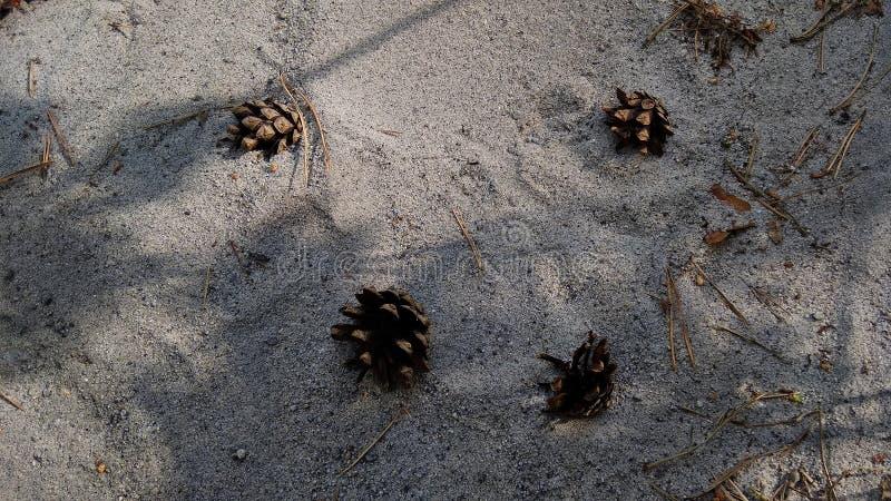 Cônes de pin sur le sable de mer photos stock