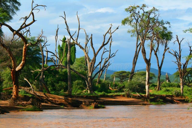Côté de fleuve photographie stock