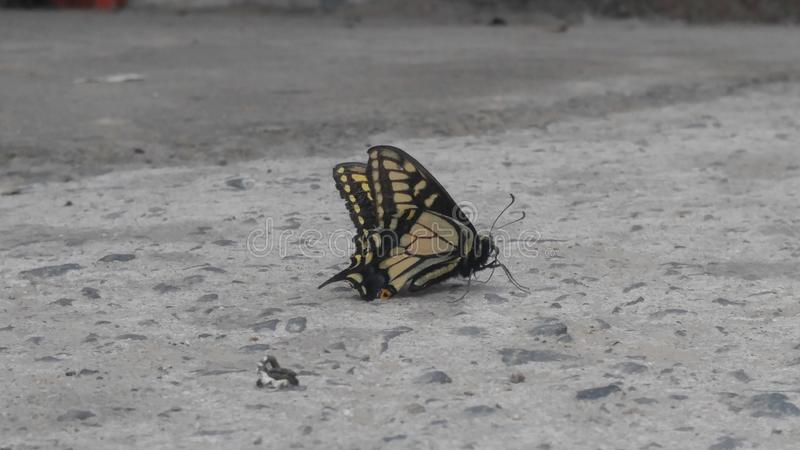 Côté de papillon photos stock