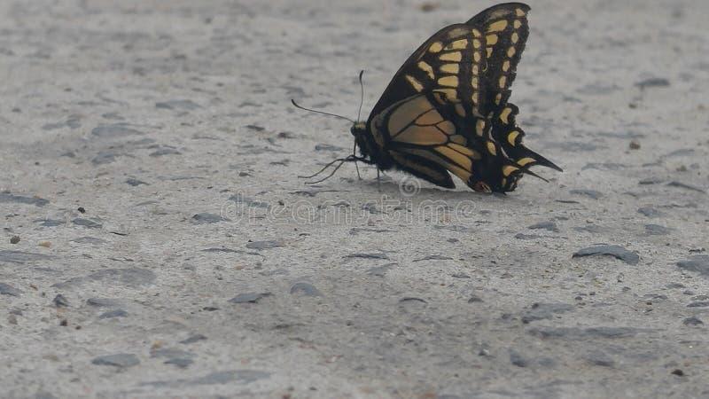 Côté deux de papillon photographie stock