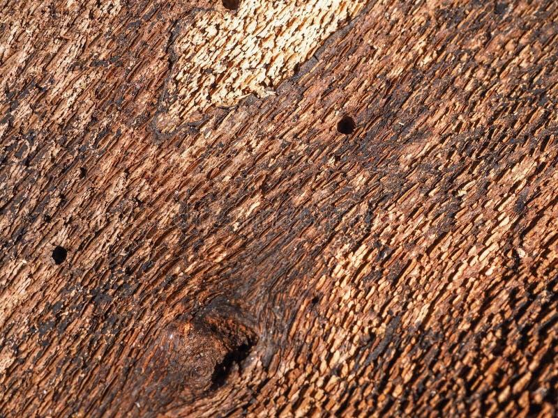 Côté intérieur de l'écorce d'arbre image stock