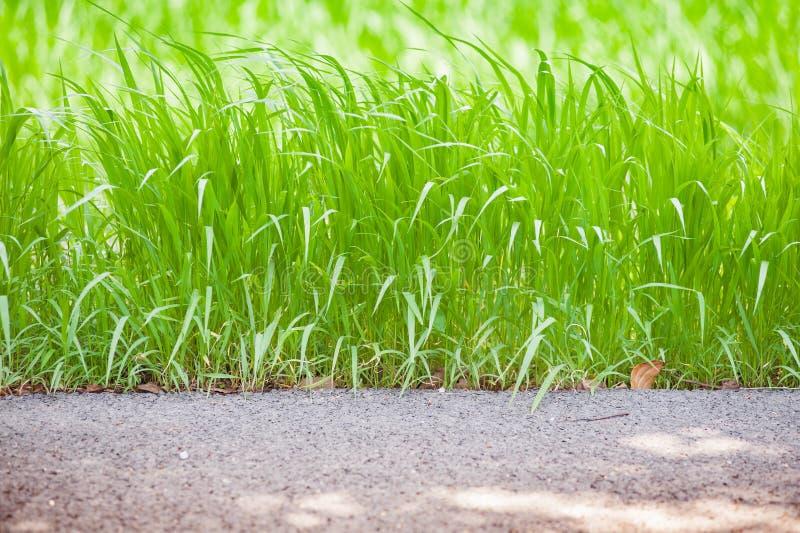 Côté parfait de la route avec l'herbe verte fraîche photos libres de droits