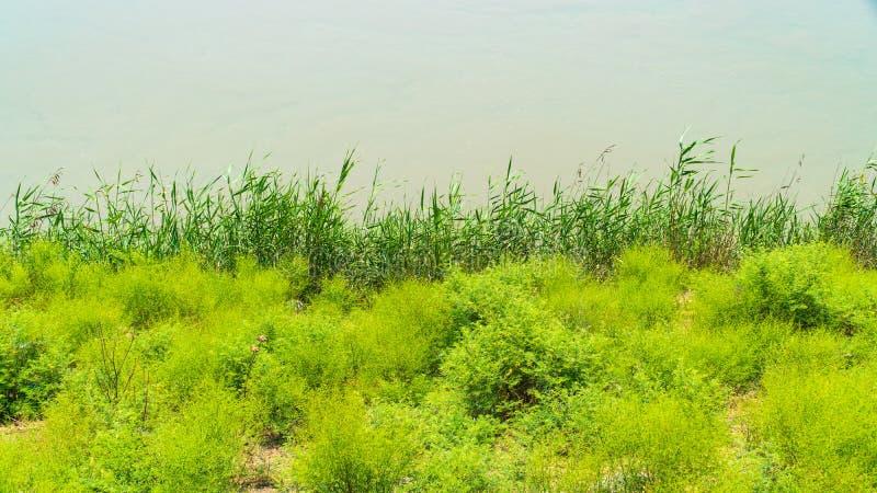 Côte d'une rivière plate large photographie stock libre de droits